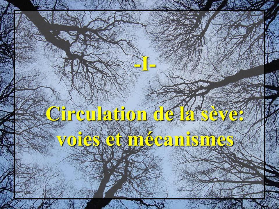 -I- Circulation de la sève: voies et mécanismes