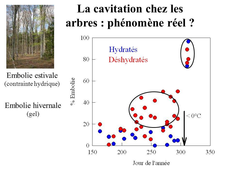La cavitation chez les arbres : phénomène réel