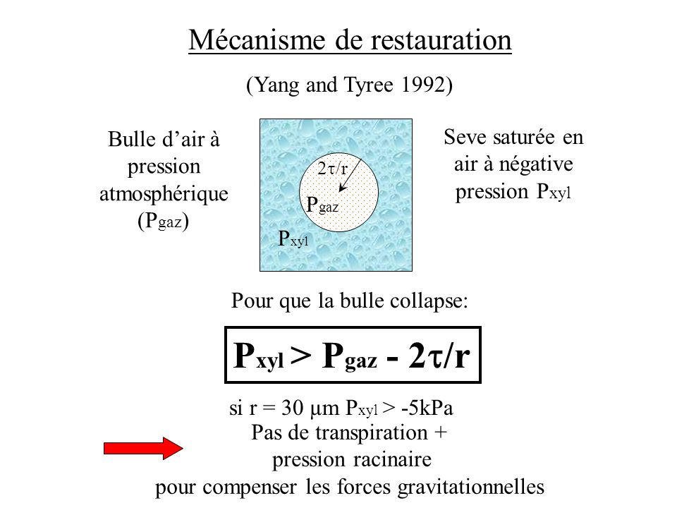 Pxyl > Pgaz - 2t/r Mécanisme de restauration (Yang and Tyree 1992)