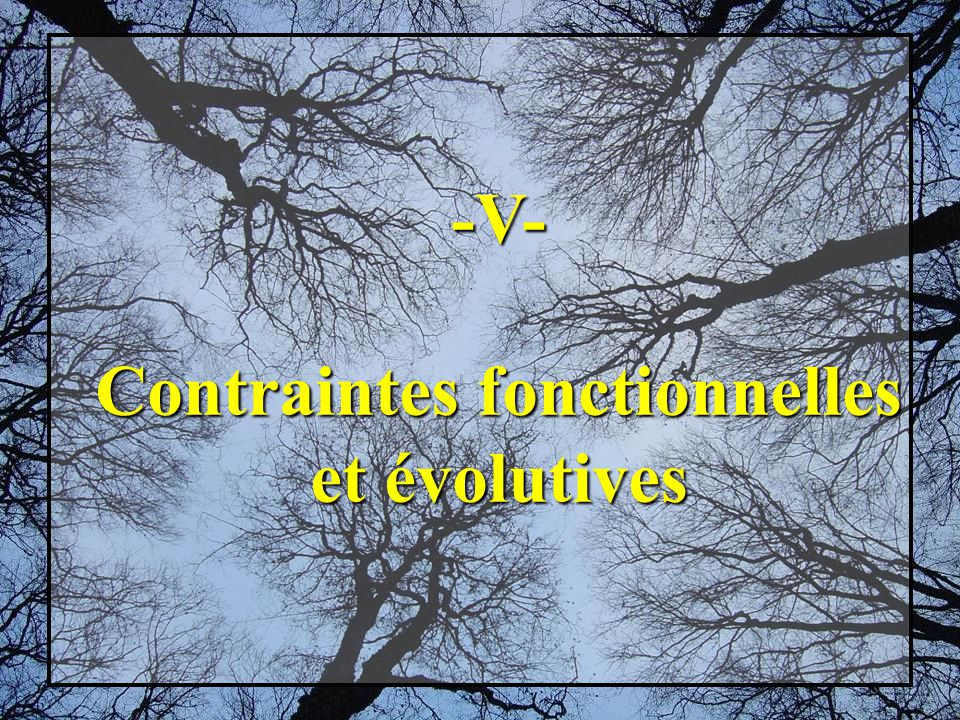 -V- Contraintes fonctionnelles et évolutives