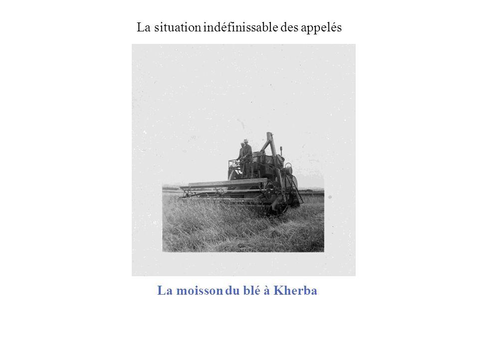 La moisson du blé à Kherba
