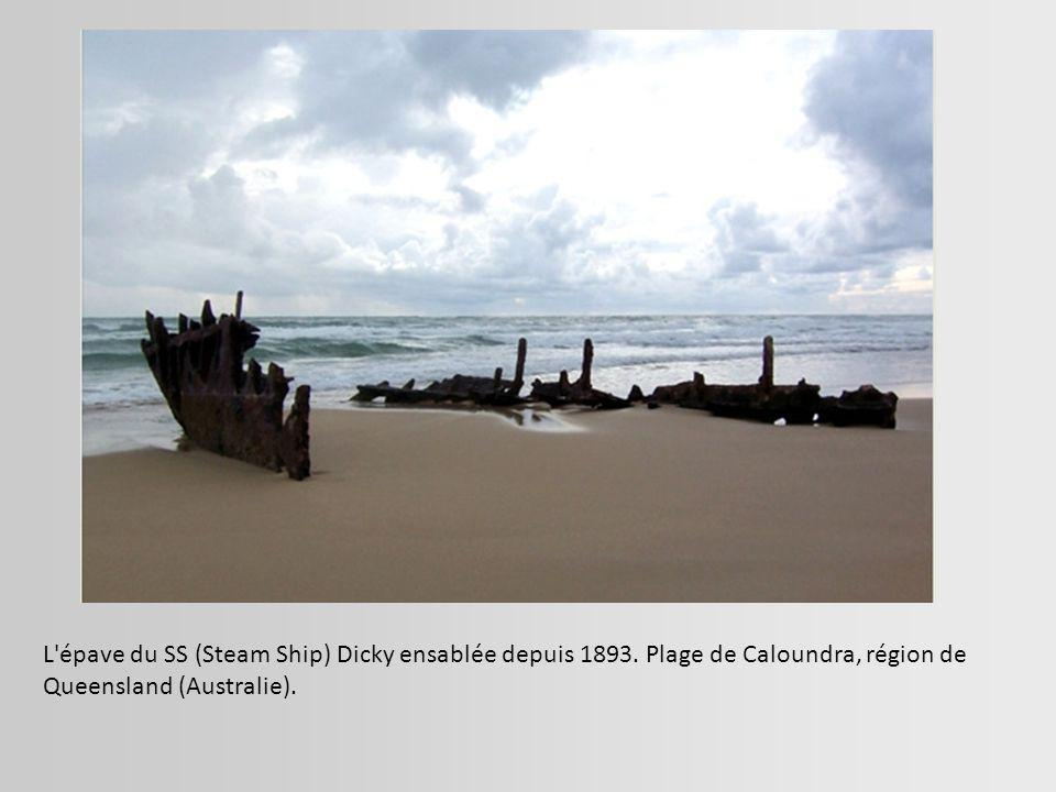 L épave du SS (Steam Ship) Dicky ensablée depuis 1893