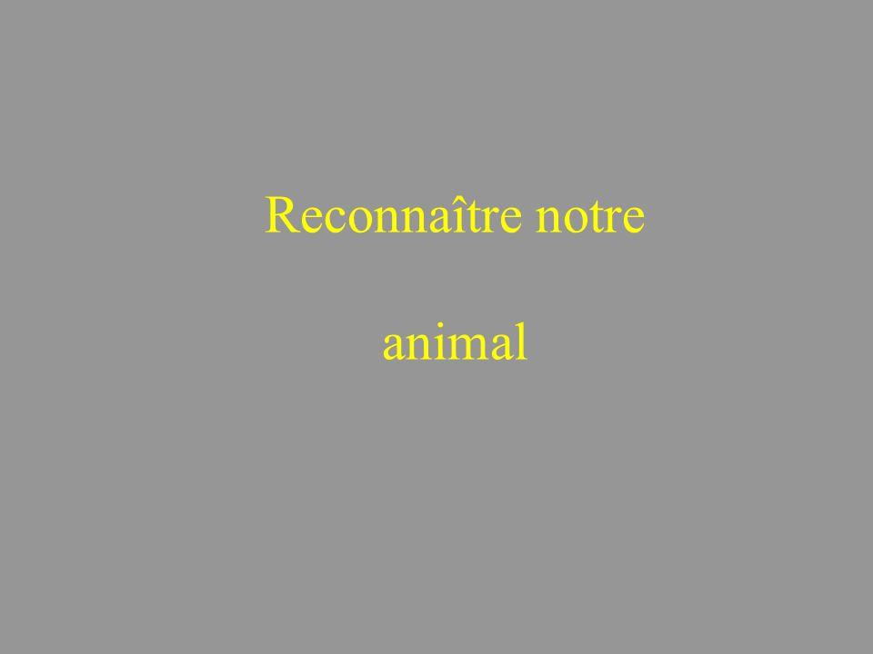 Reconnaître notre animal