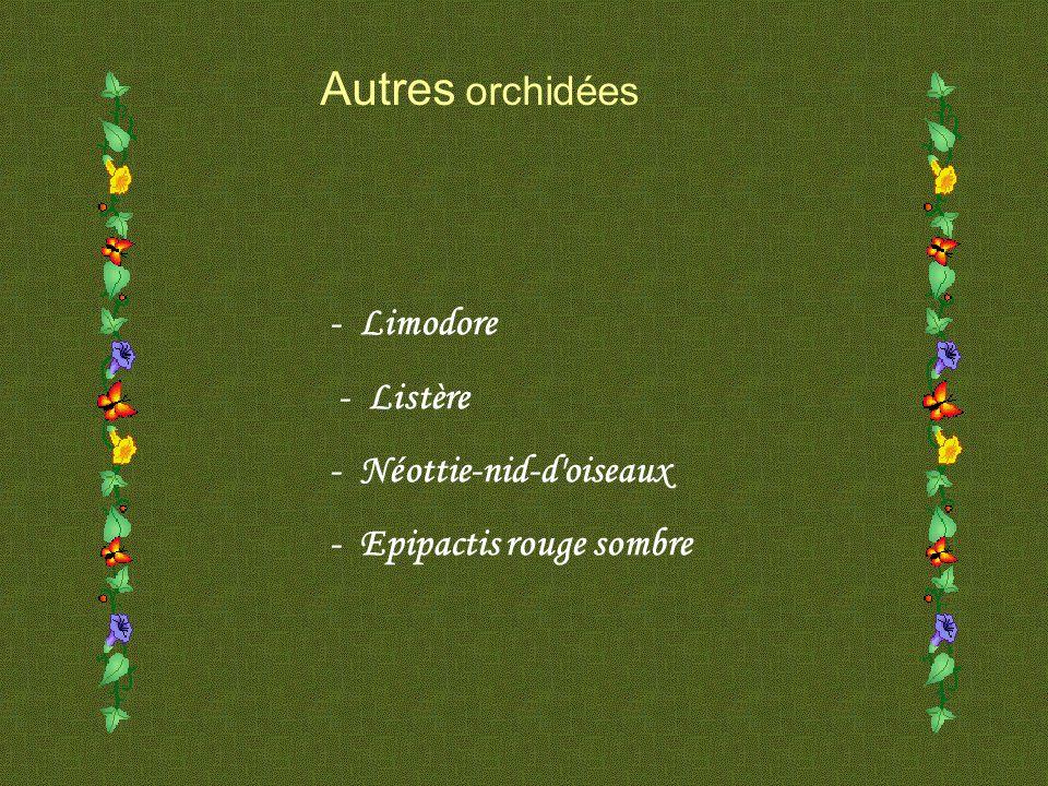 Autres orchidées - Limodore - Listère - Néottie-nid-d oiseaux