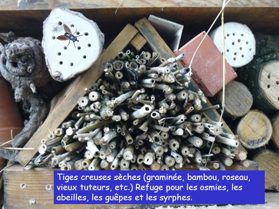 Tiges creuses sèches (graminée, bambou, roseau, vieux tuteurs, etc