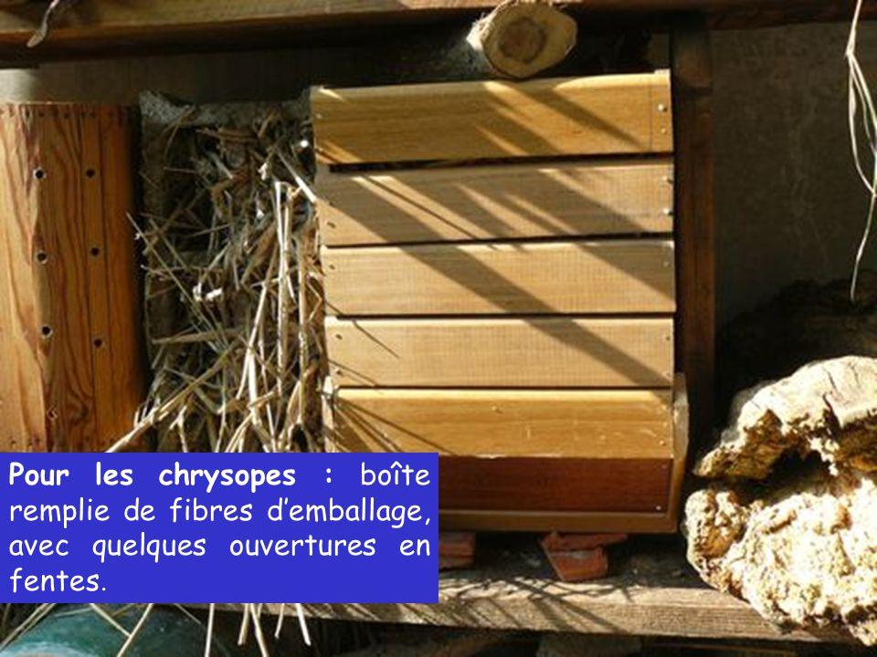 Pour les chrysopes : boîte remplie de fibres d'emballage, avec quelques ouvertures en fentes.