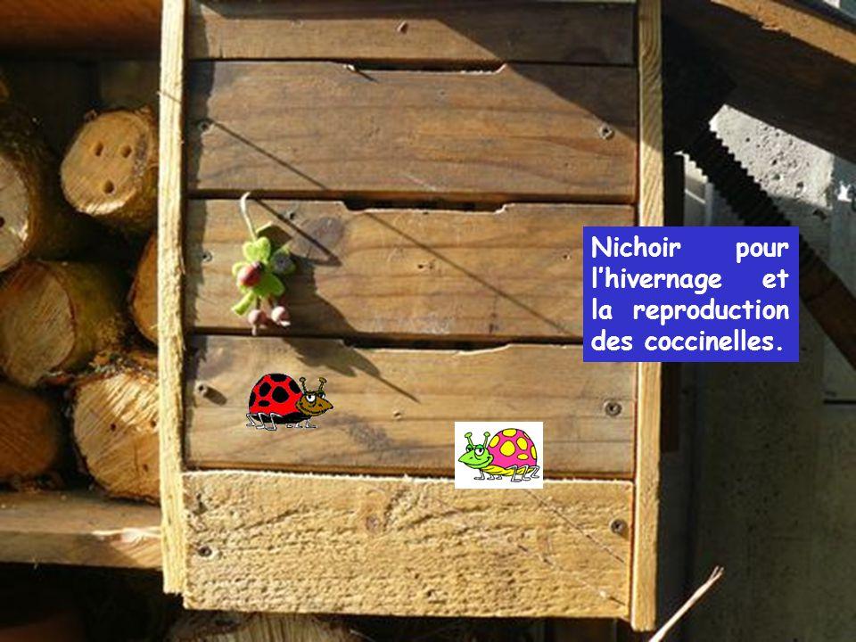 Nichoir pour l'hivernage et la reproduction des coccinelles.