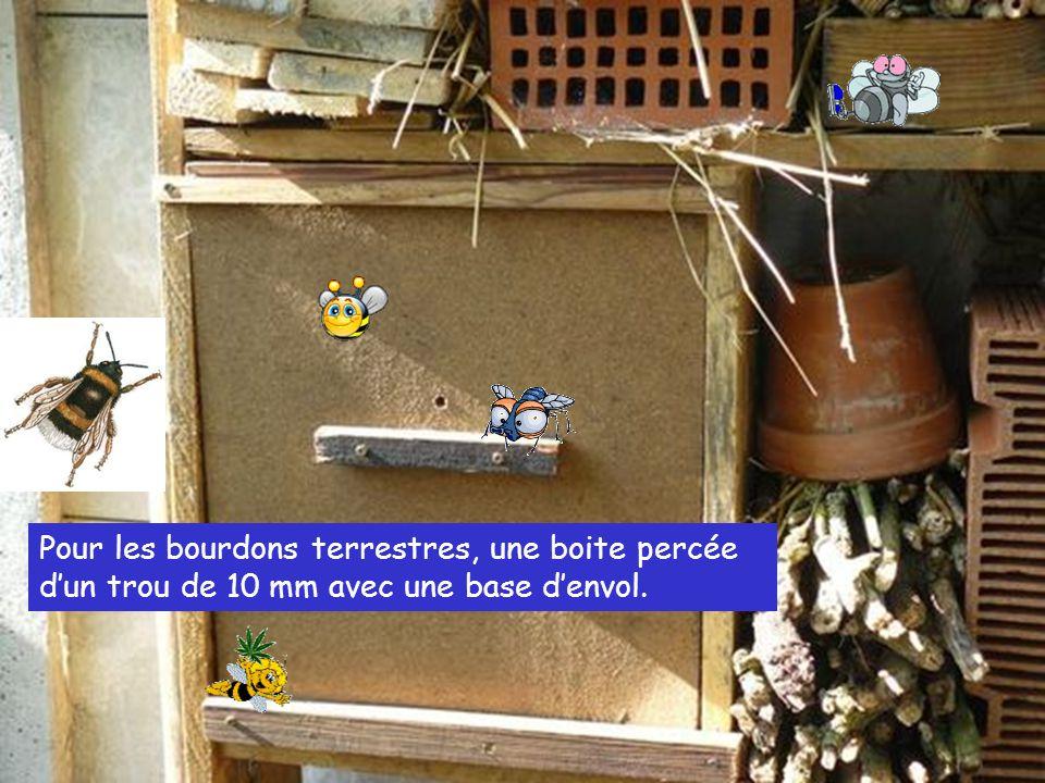 Pour les bourdons terrestres, une boite percée d'un trou de 10 mm avec une base d'envol.