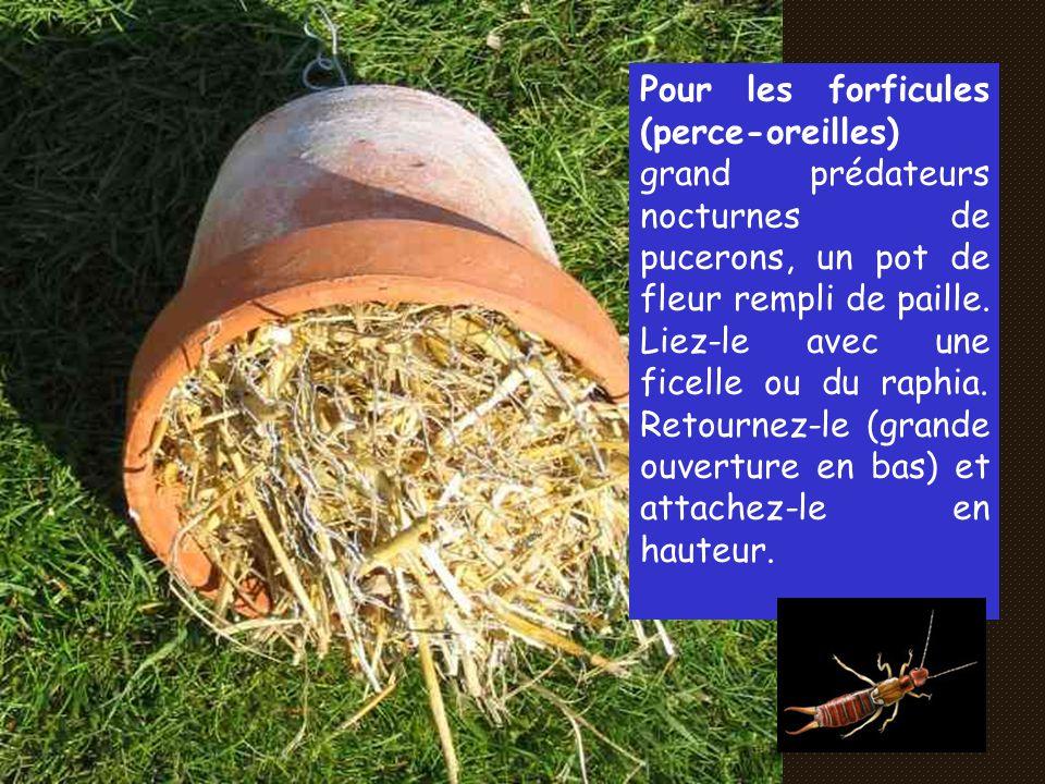 Pour les forficules (perce-oreilles) grand prédateurs nocturnes de pucerons, un pot de fleur rempli de paille.