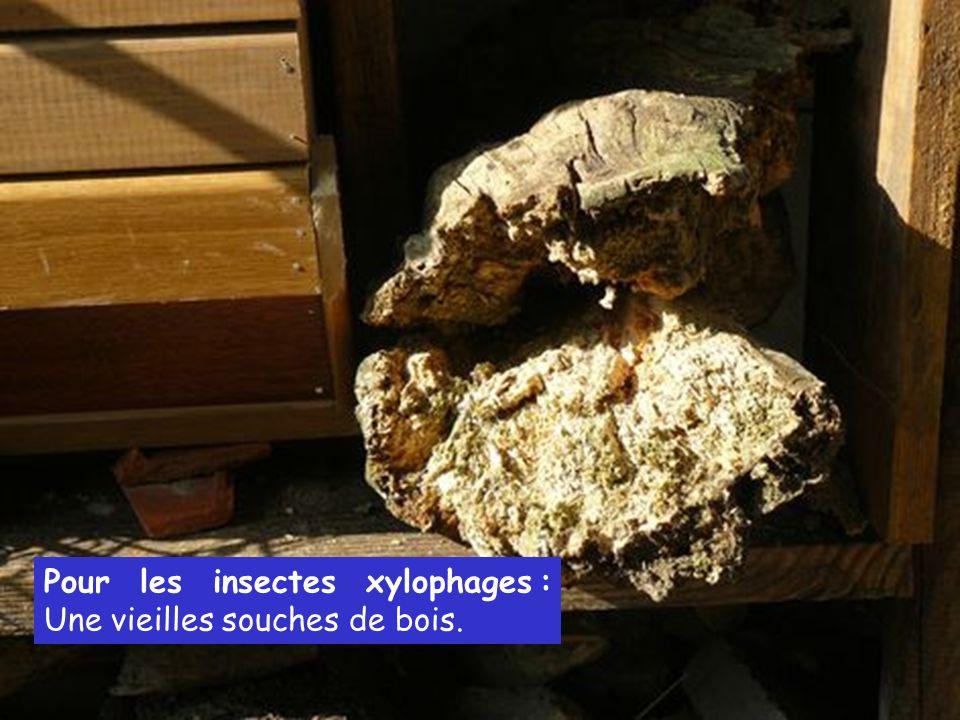 Pour les insectes xylophages : Une vieilles souches de bois.