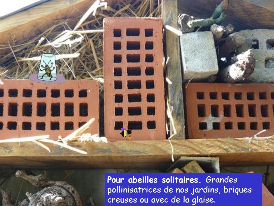 Pour abeilles solitaires