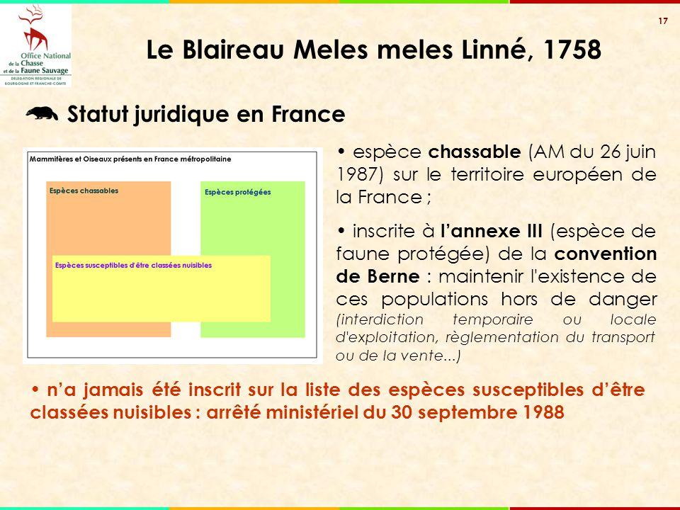 Le Blaireau Meles meles Linné, 1758