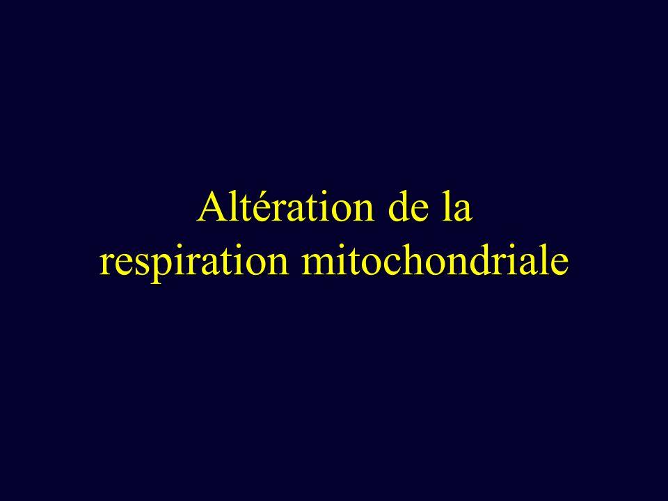 Altération de la respiration mitochondriale