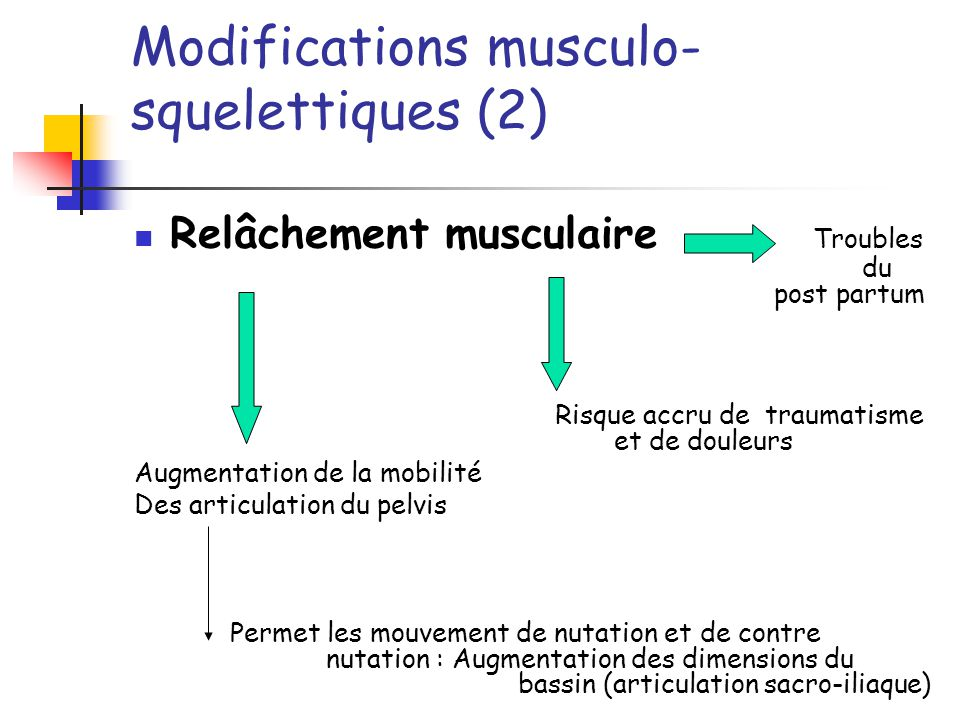 Modifications musculo-squelettiques (2)