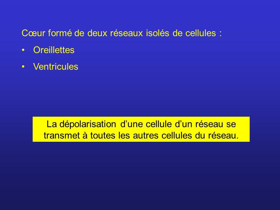 Cœur formé de deux réseaux isolés de cellules :