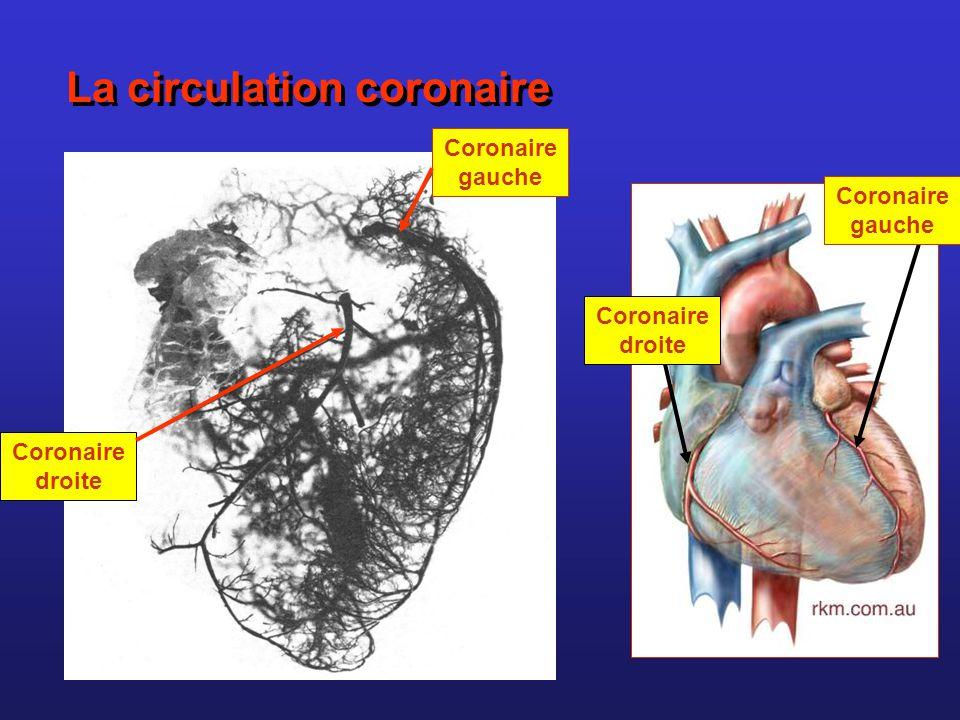 La circulation coronaire