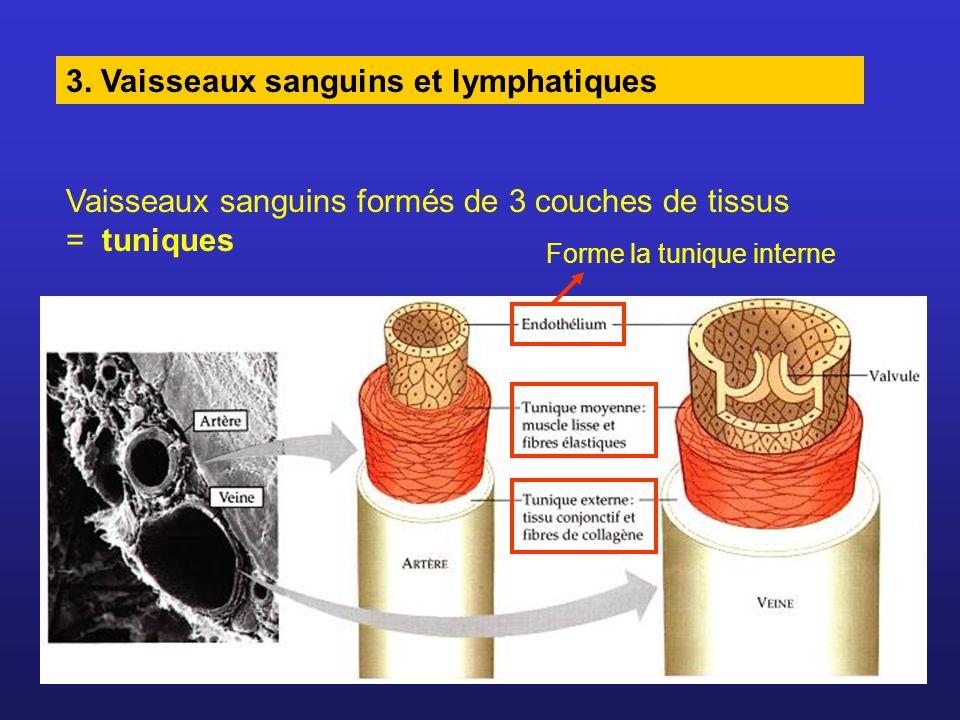 3. Vaisseaux sanguins et lymphatiques