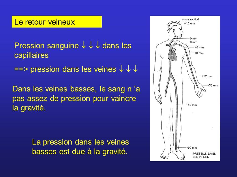 Le retour veineux Pression sanguine    dans les capillaires. ==> pression dans les veines   