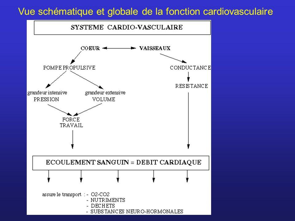 Vue schématique et globale de la fonction cardiovasculaire