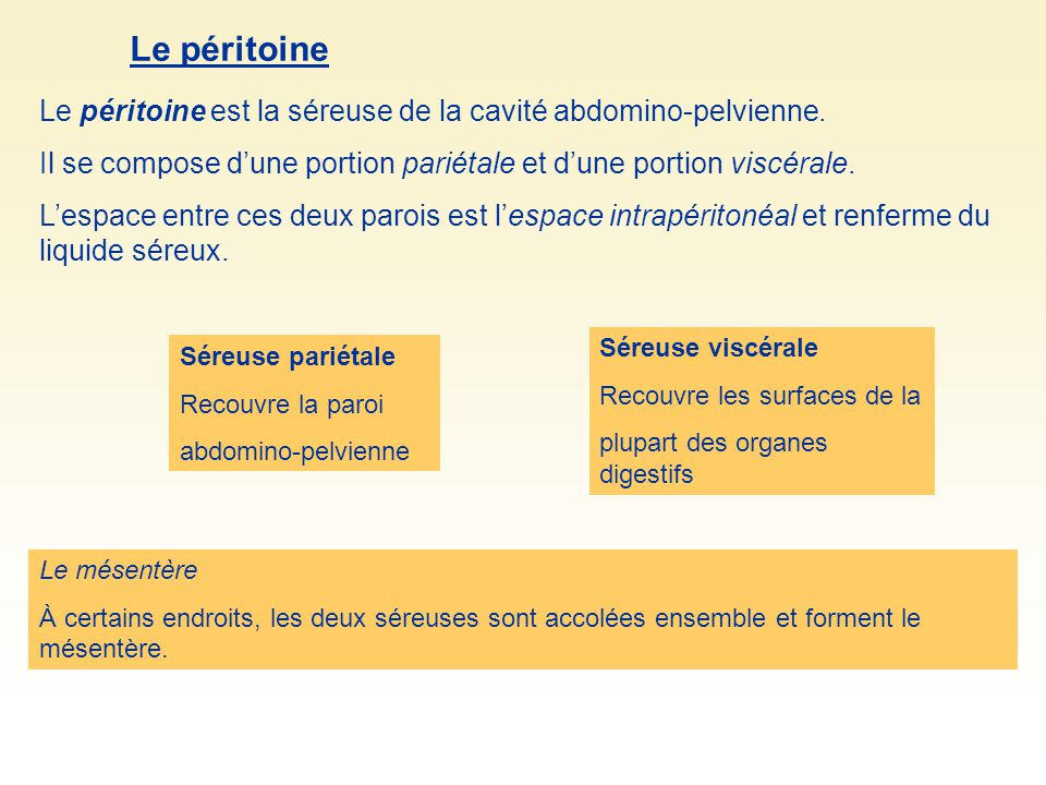 Le péritoine Le péritoine est la séreuse de la cavité abdomino-pelvienne. Il se compose d'une portion pariétale et d'une portion viscérale.