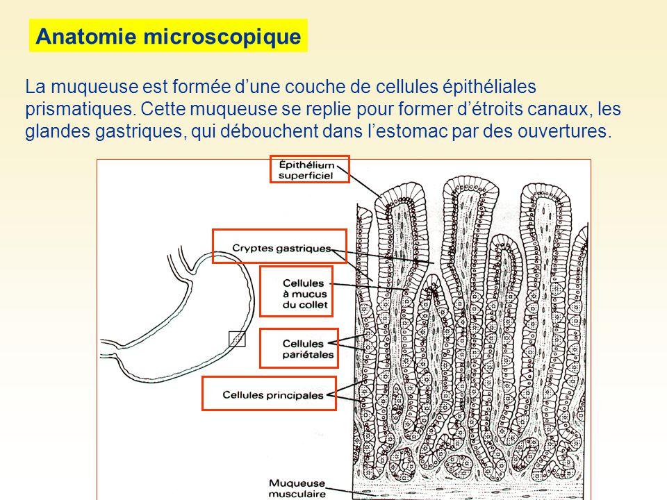 Anatomie microscopique