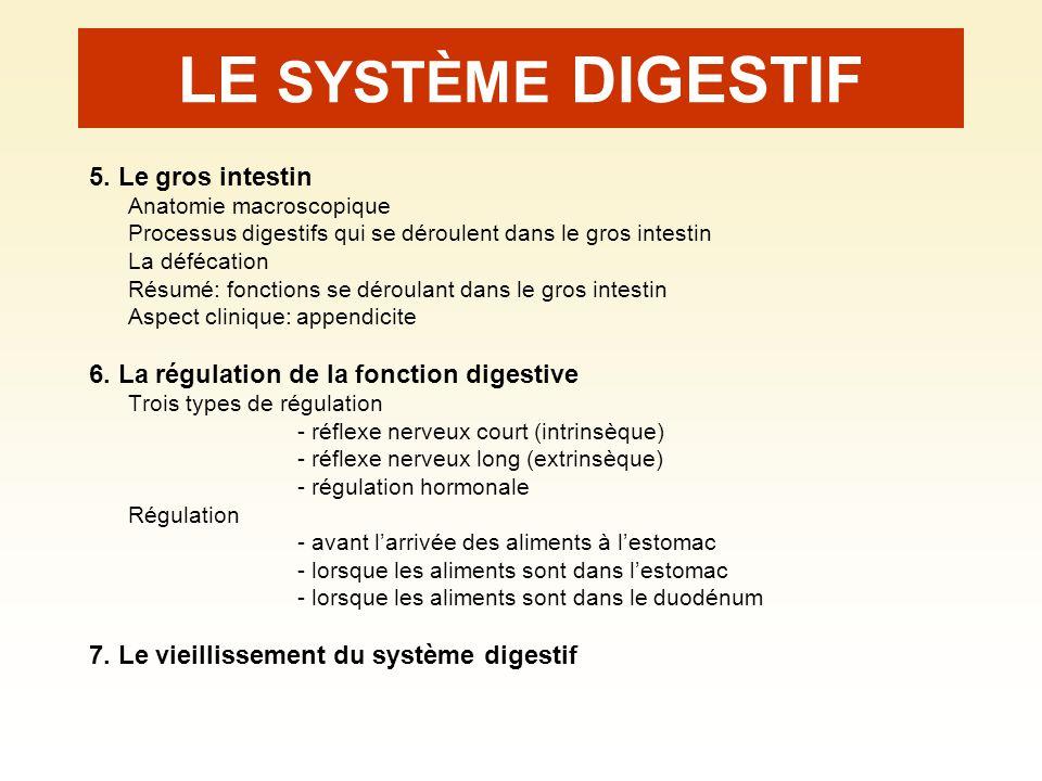 LE SYSTÈME DIGESTIF 5. Le gros intestin