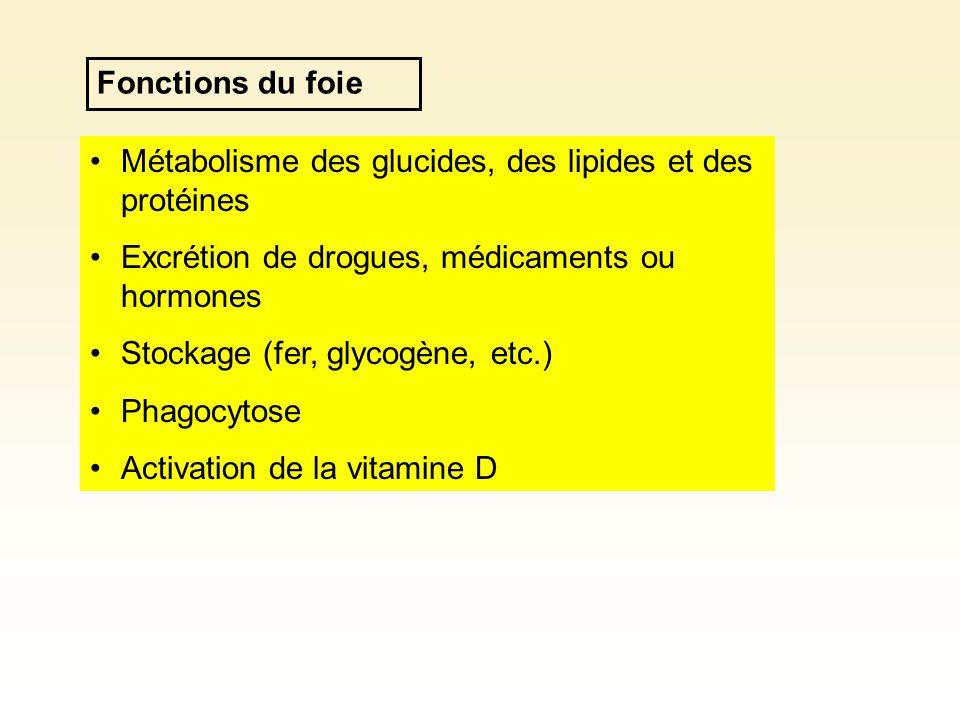 Fonctions du foie Métabolisme des glucides, des lipides et des protéines. Excrétion de drogues, médicaments ou hormones.