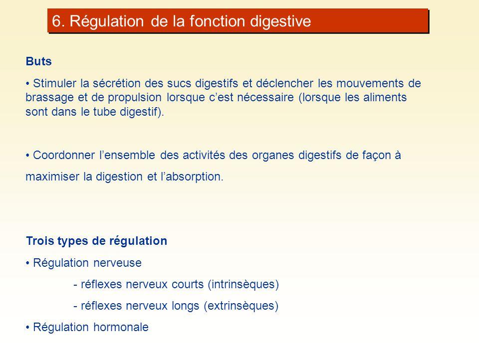 6. Régulation de la fonction digestive