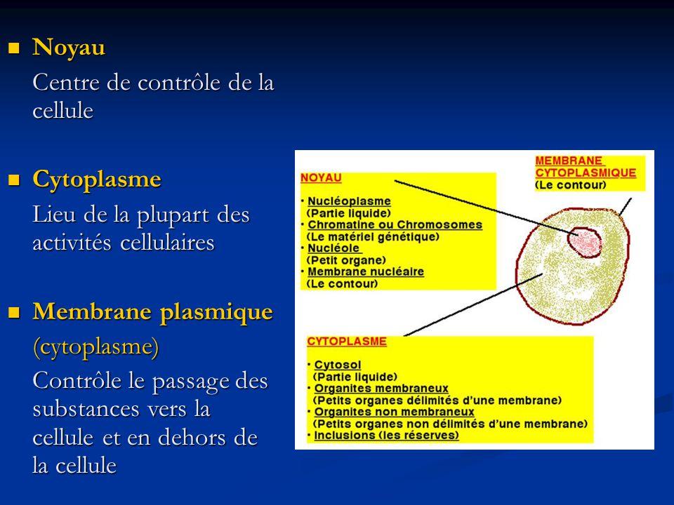 Noyau Centre de contrôle de la cellule. Cytoplasme. Lieu de la plupart des activités cellulaires.