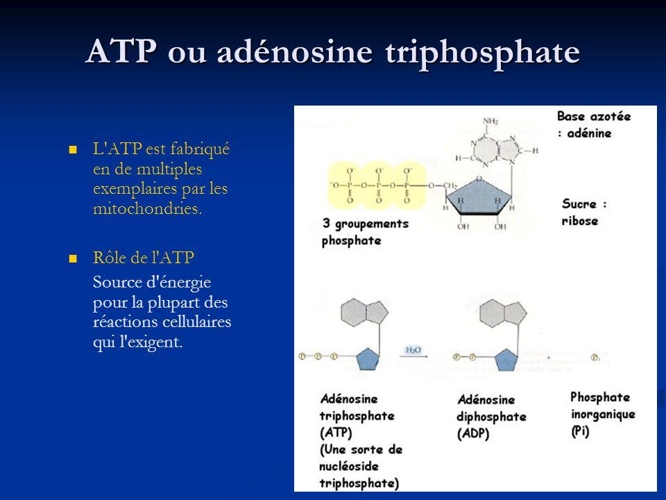 ATP ou adénosine triphosphate