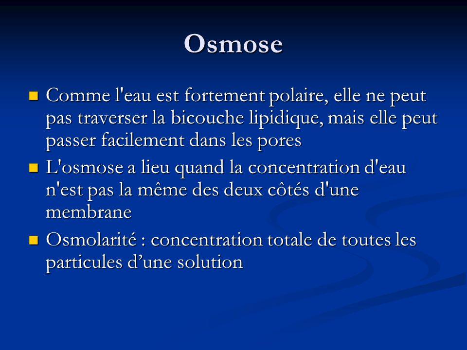 Osmose Comme l eau est fortement polaire, elle ne peut pas traverser la bicouche lipidique, mais elle peut passer facilement dans les pores.