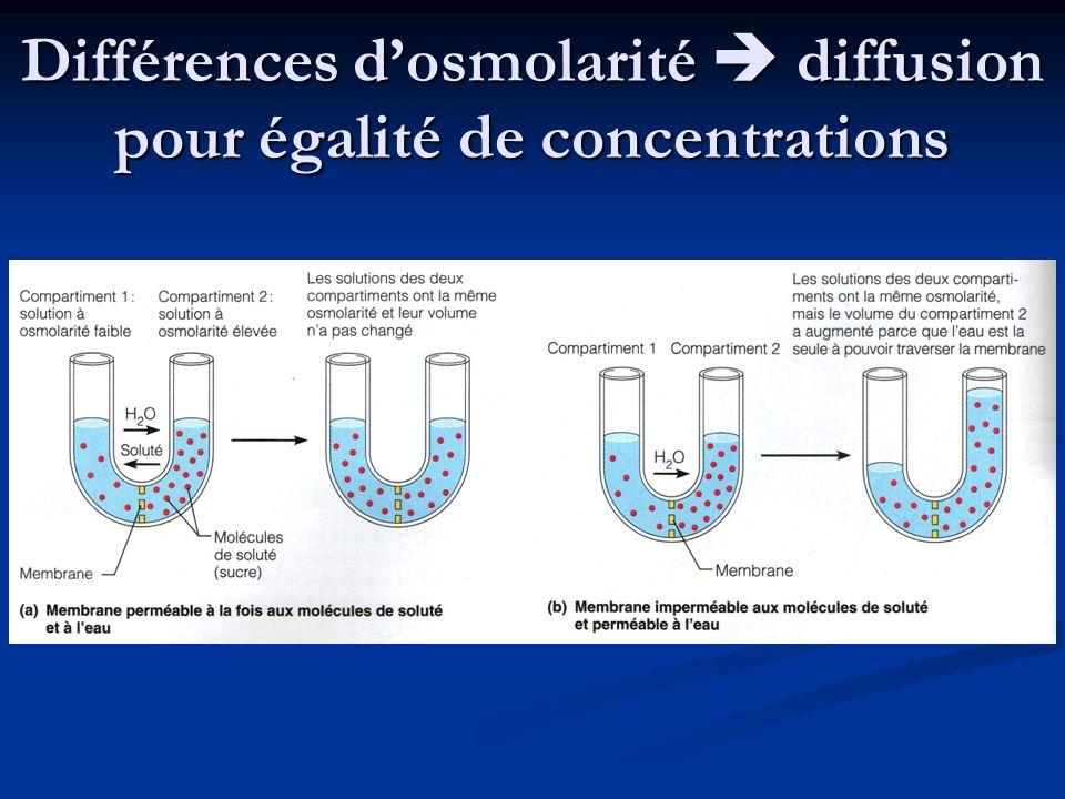 Différences d'osmolarité  diffusion pour égalité de concentrations