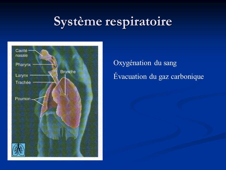 Système respiratoire Oxygénation du sang Évacuation du gaz carbonique