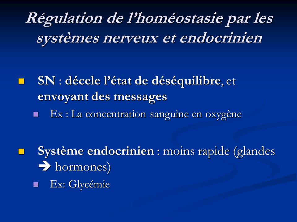 Régulation de l'homéostasie par les systèmes nerveux et endocrinien