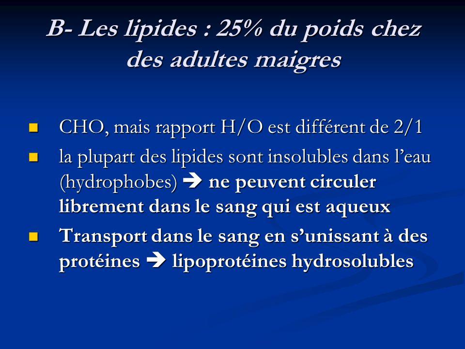 B- Les lipides : 25% du poids chez des adultes maigres