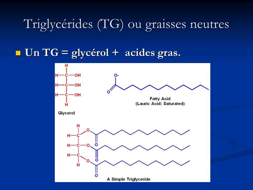Triglycérides (TG) ou graisses neutres