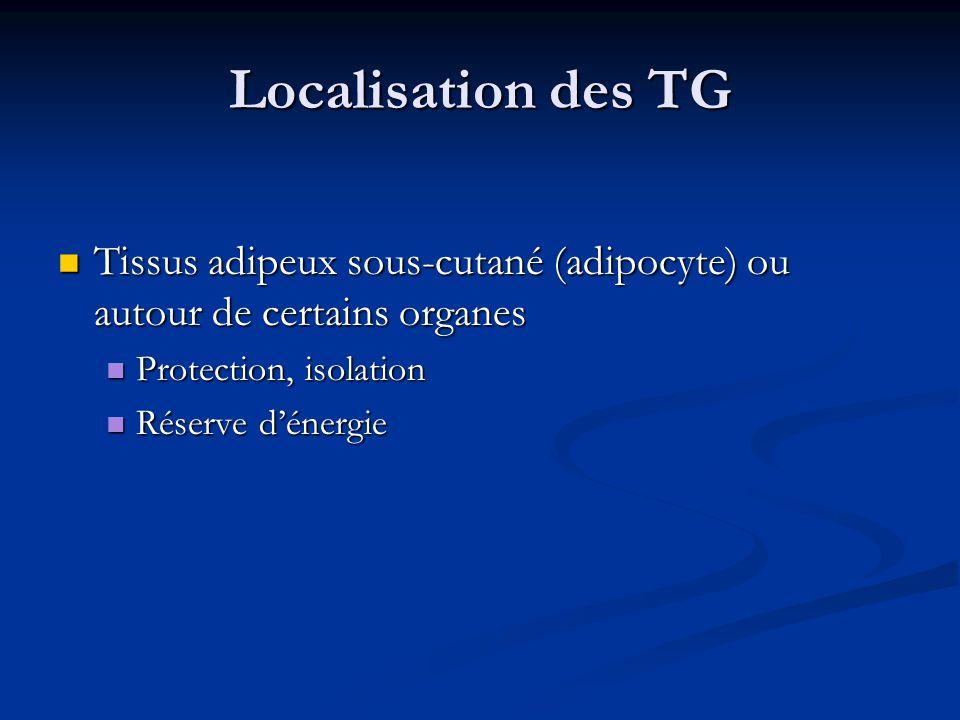 Localisation des TG Tissus adipeux sous-cutané (adipocyte) ou autour de certains organes. Protection, isolation.