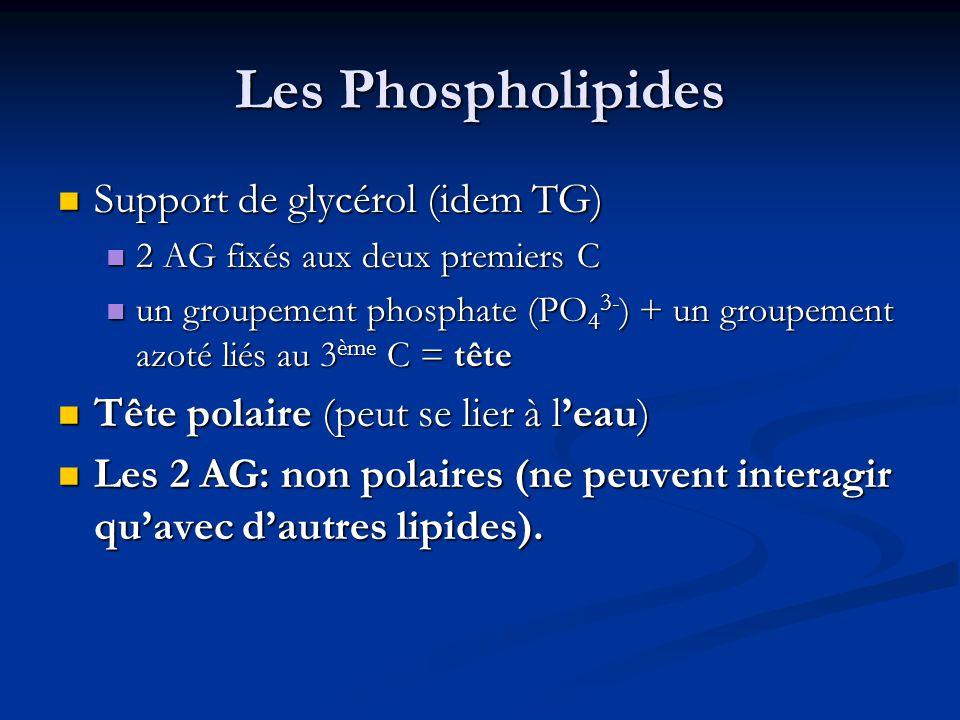 Les Phospholipides Support de glycérol (idem TG)