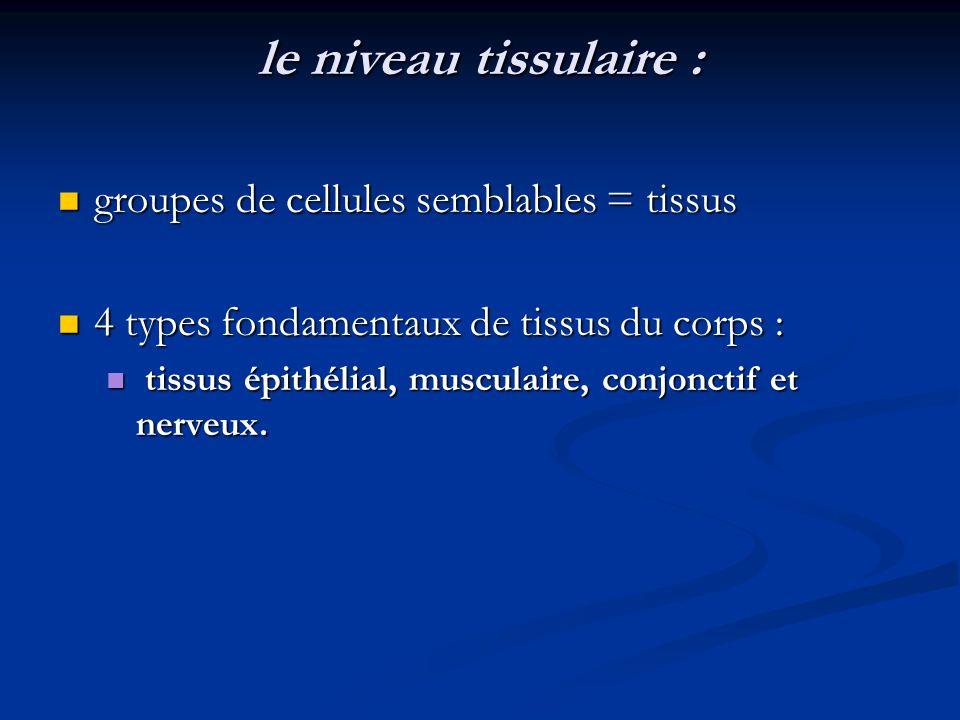 le niveau tissulaire : groupes de cellules semblables = tissus