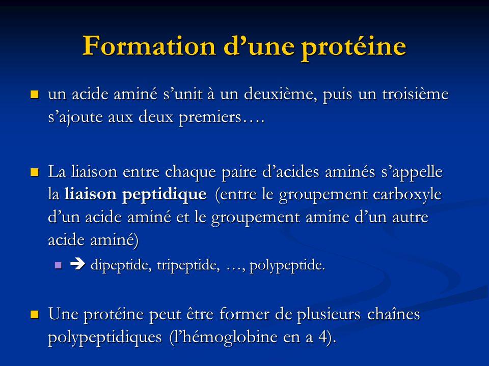 Formation d'une protéine