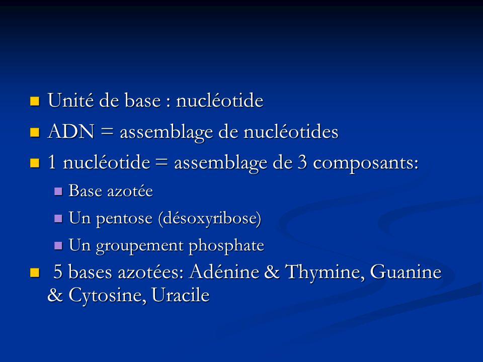 Unité de base : nucléotide ADN = assemblage de nucléotides