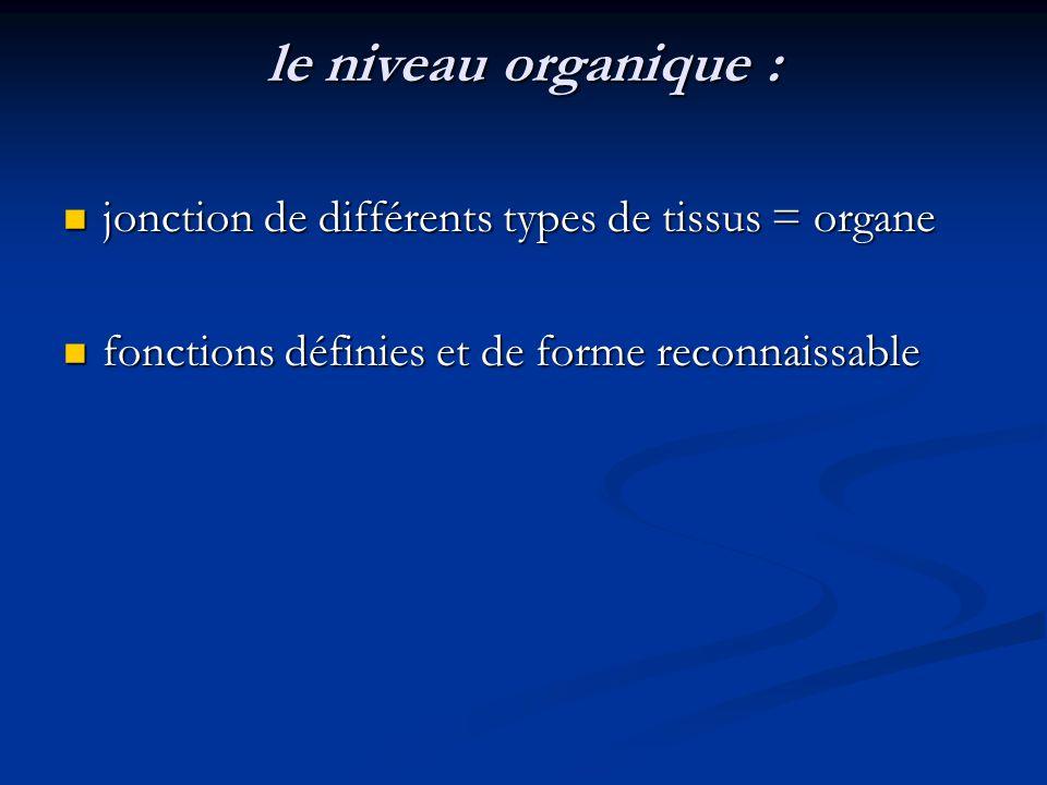 le niveau organique : jonction de différents types de tissus = organe