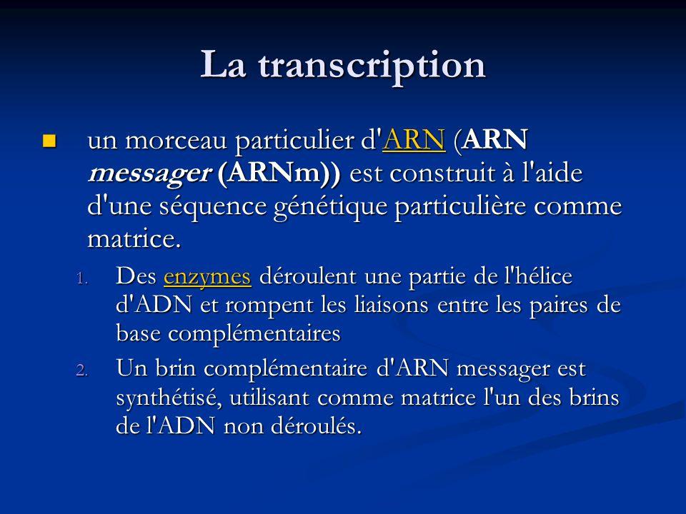 La transcription un morceau particulier d ARN (ARN messager (ARNm)) est construit à l aide d une séquence génétique particulière comme matrice.