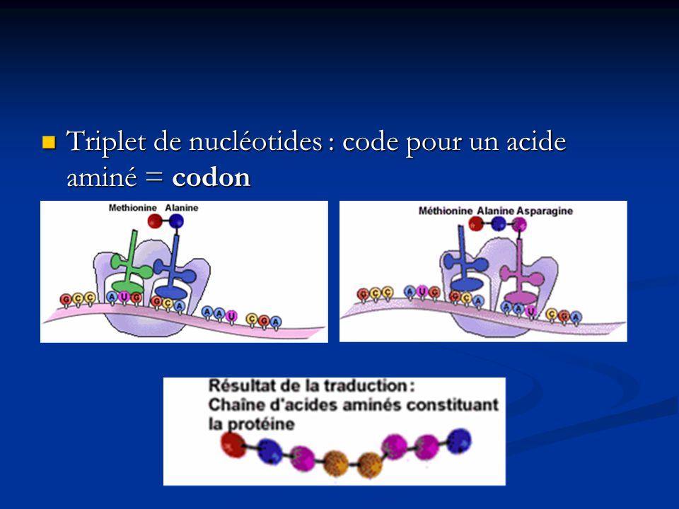 Triplet de nucléotides : code pour un acide aminé = codon
