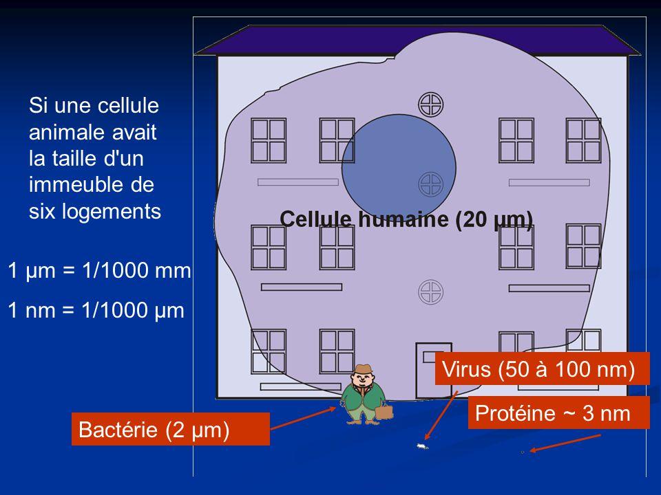 Si une cellule animale avait la taille d un immeuble de six logements