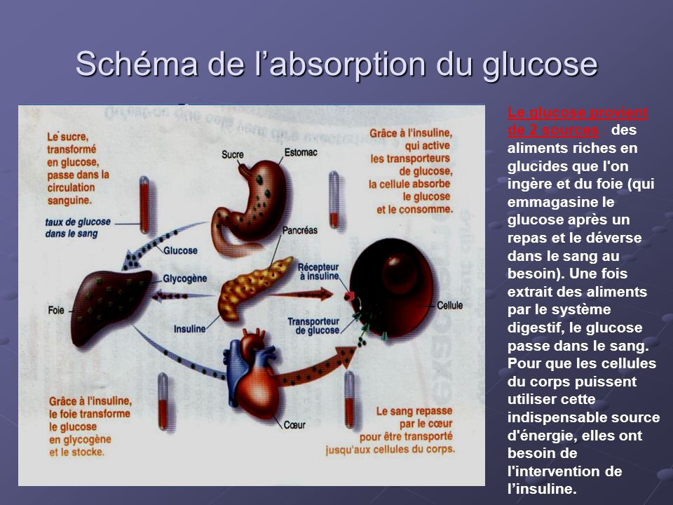 Schéma de l'absorption du glucose
