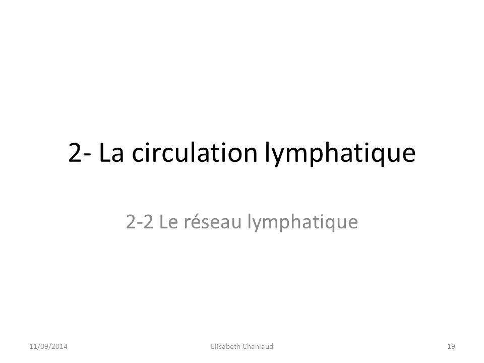 2- La circulation lymphatique