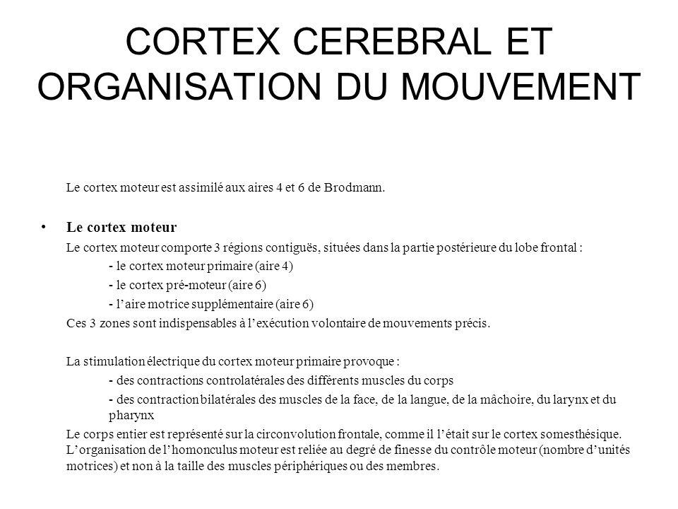 CORTEX CEREBRAL ET ORGANISATION DU MOUVEMENT