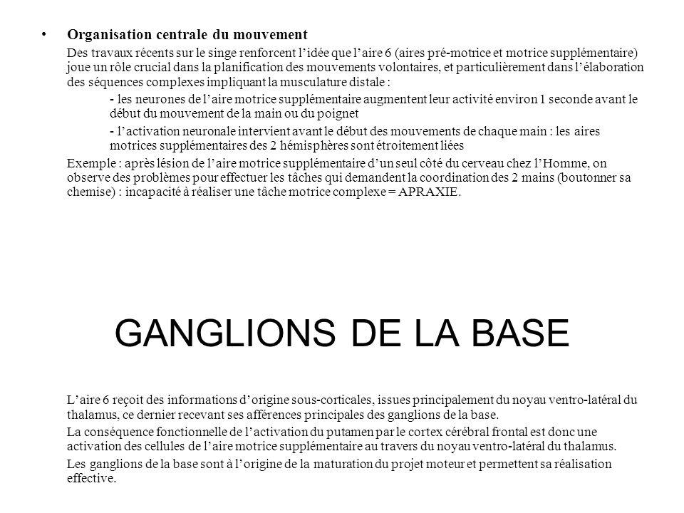 GANGLIONS DE LA BASE Organisation centrale du mouvement