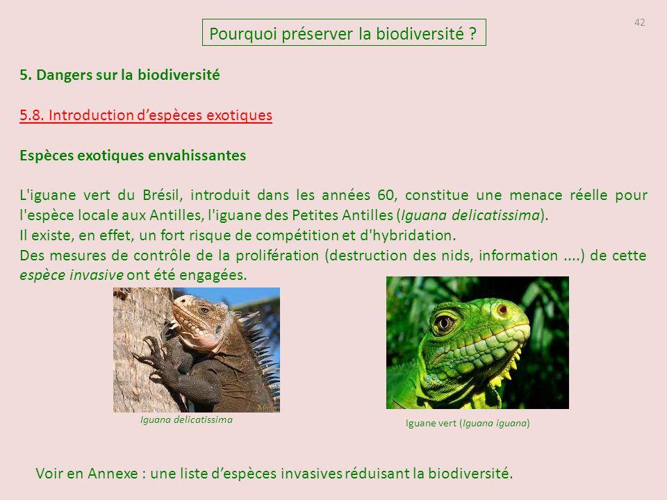 Iguane vert (Iguana iguana)